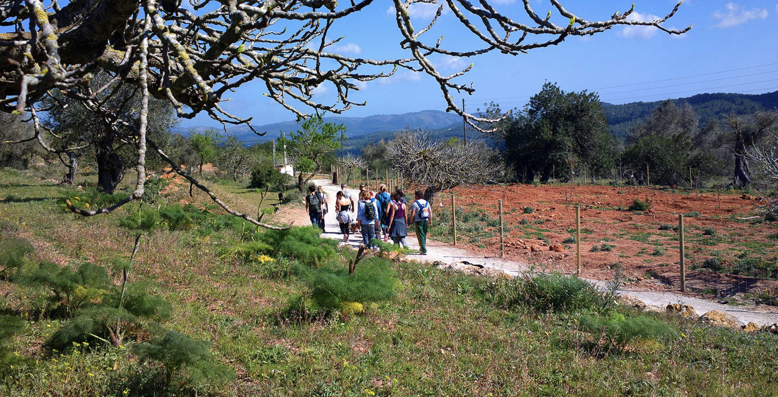 Ibiza walks by hikingibiza.nl, walking group, blue sky, summer field