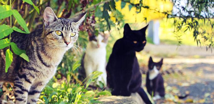 Cats Of Ibiza