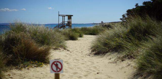 Salinas Ibiza